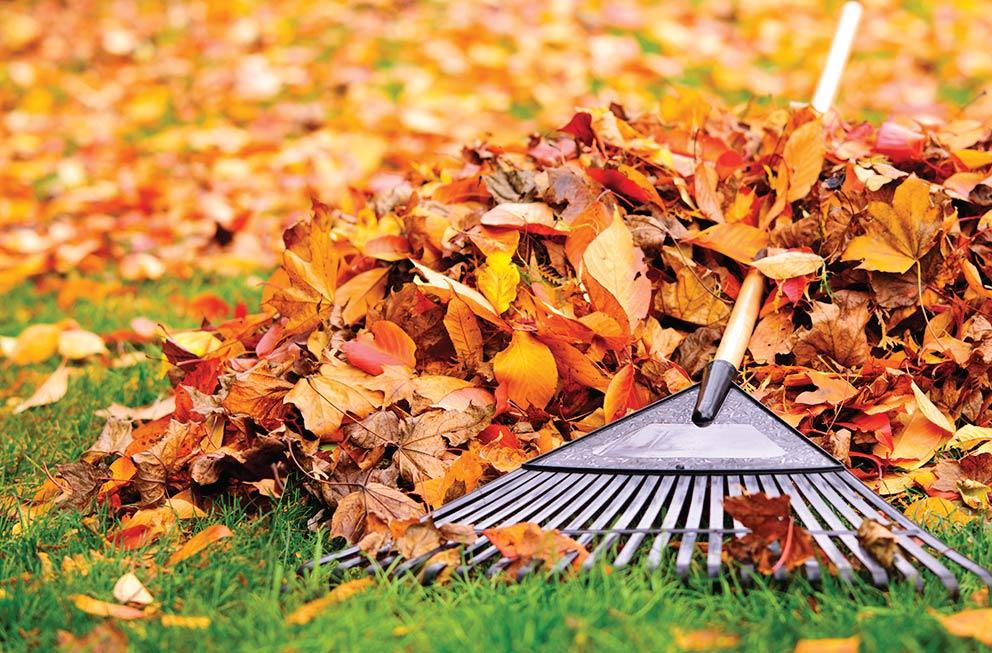Leaf Cleanup Tips