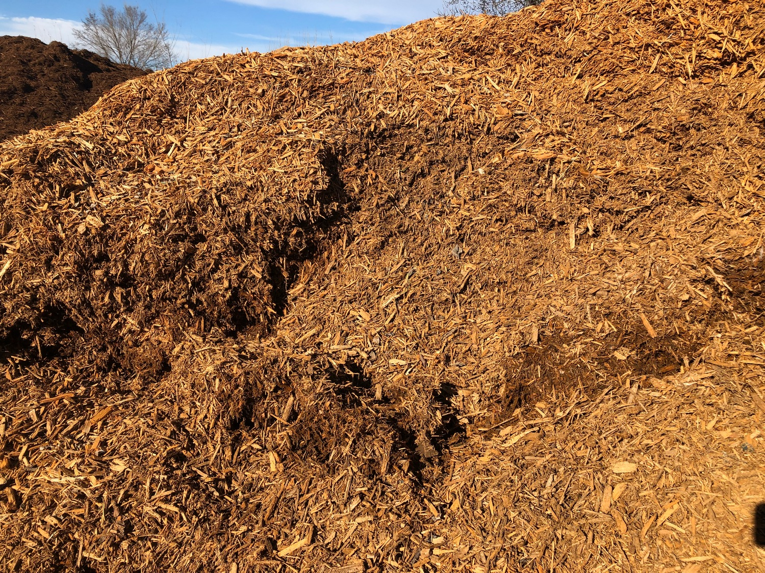 Bulk Golden Mulch